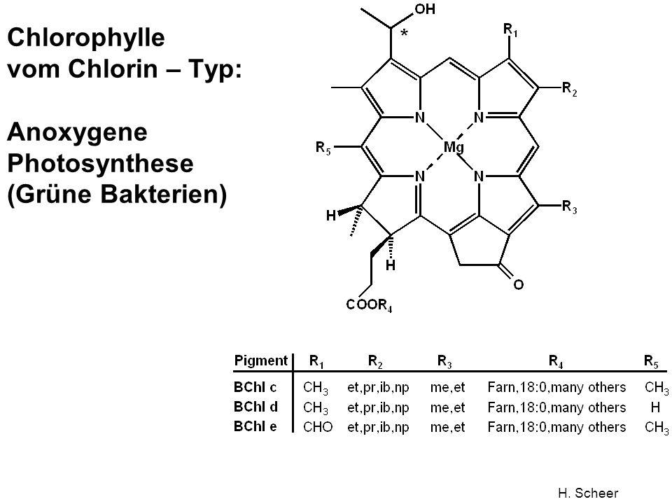 Chlorophylle vom Chlorin – Typ: Anoxygene Photosynthese (Grüne Bakterien)