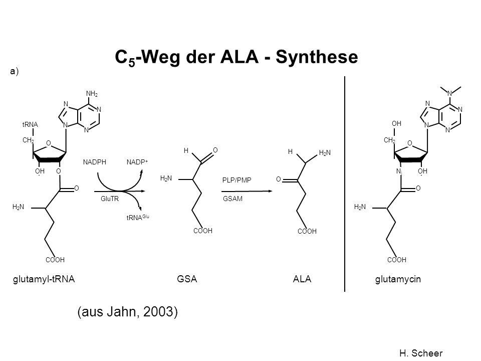 C5-Weg der ALA - Synthese