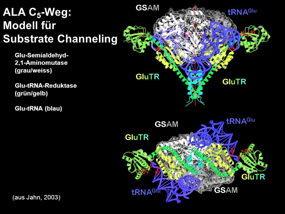 ALA C5-Weg: Modell für Substrate Channeling