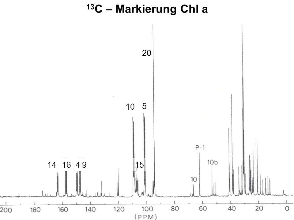 13C – Markierung Chl a 20 10 5 16 4 9 15