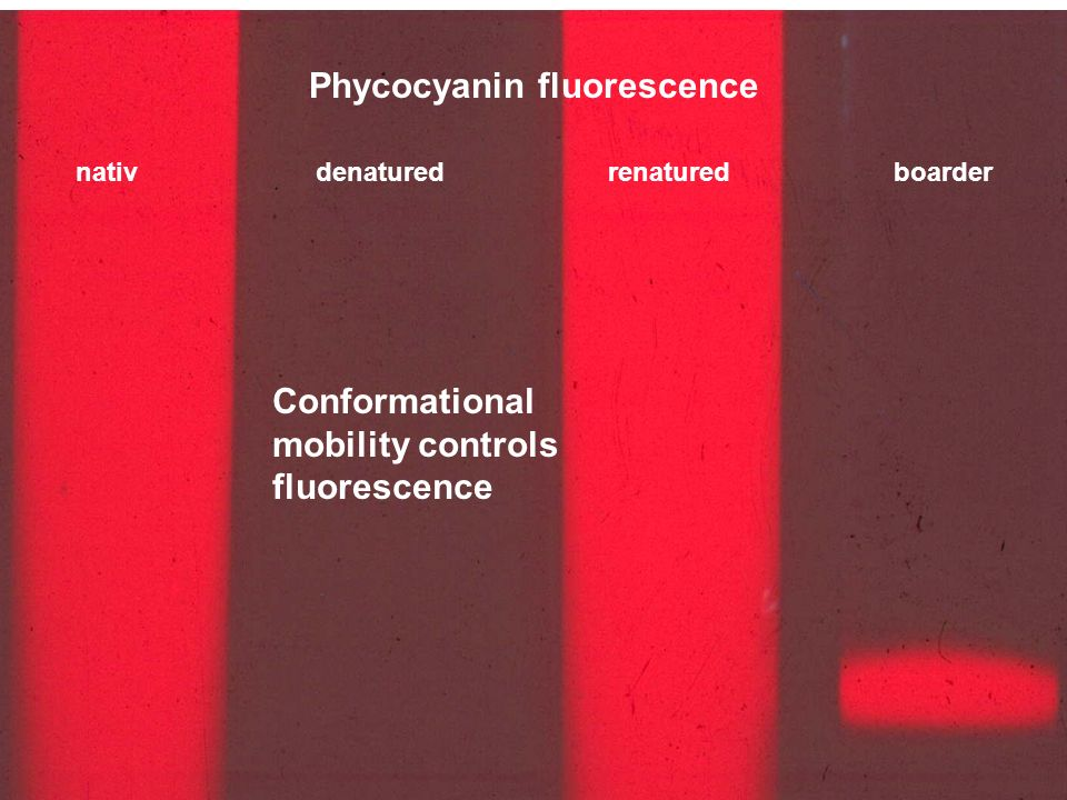Phycocyanin fluorescence