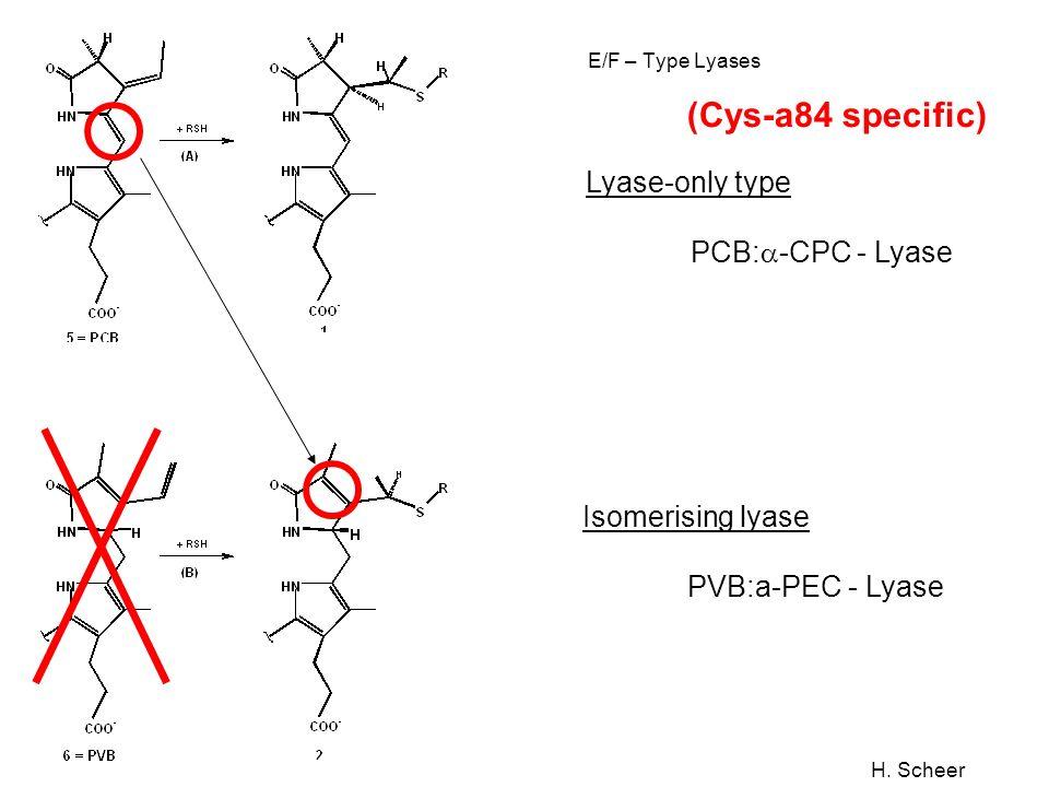 (Cys-a84 specific) Lyase-only type PCB:a-CPC - Lyase Isomerising lyase