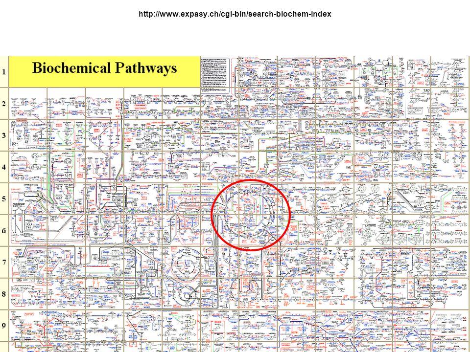 http://www.expasy.ch/cgi-bin/search-biochem-index