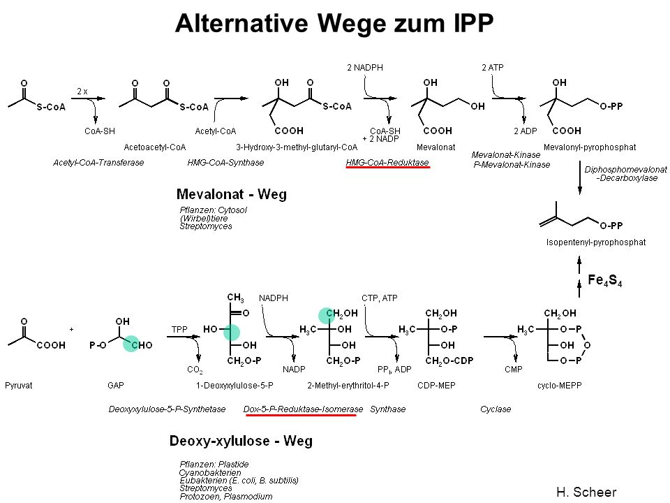 Alternative Wege zum IPP