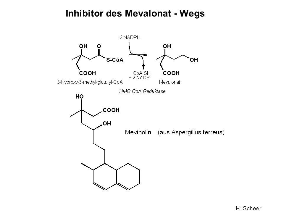 Inhibitor des Mevalonat - Wegs