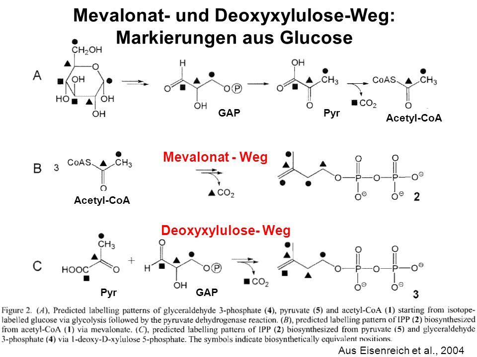 Mevalonat- und Deoxyxylulose-Weg: Markierungen aus Glucose