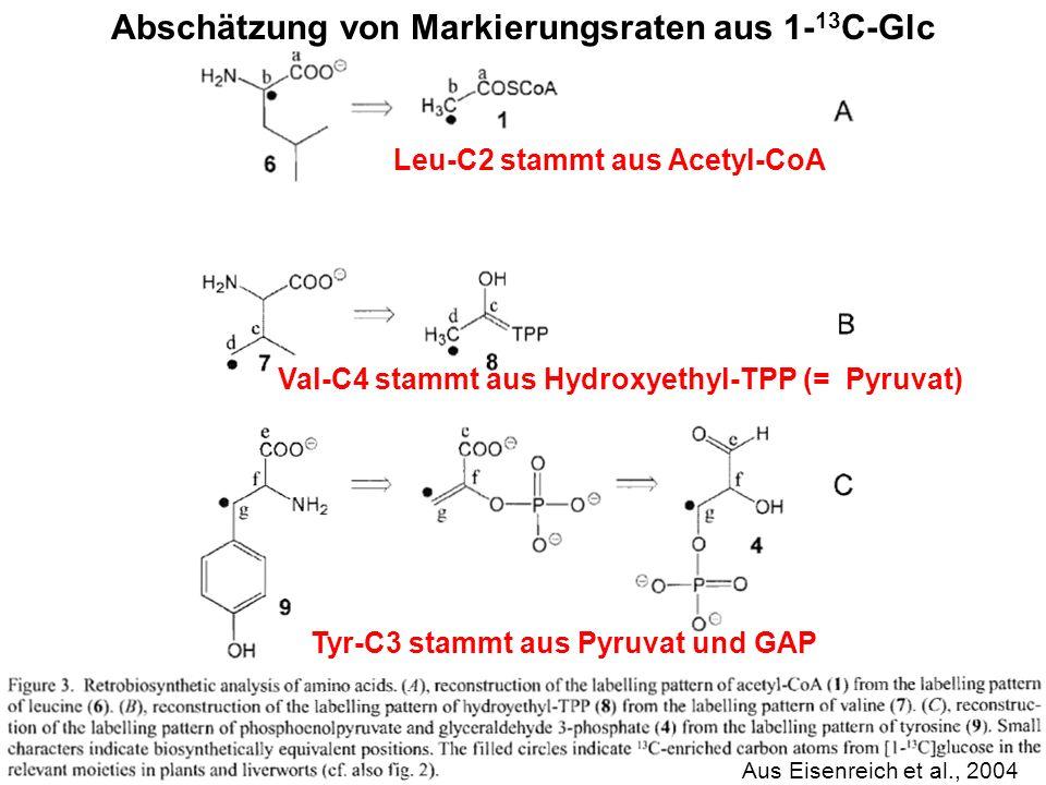 Abschätzung von Markierungsraten aus 1-13C-Glc