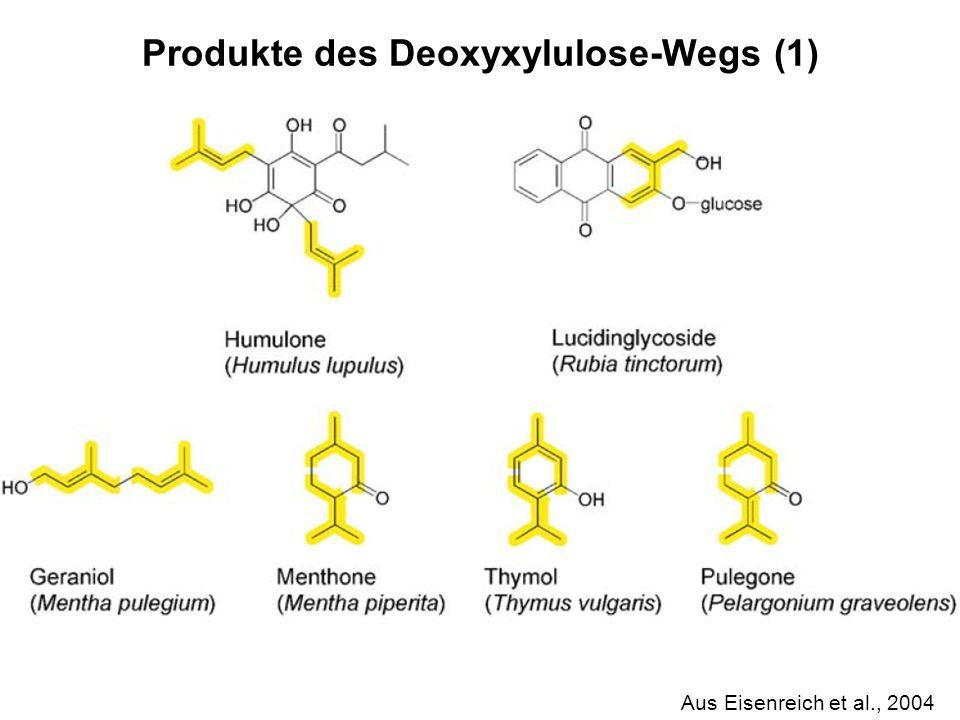 Produkte des Deoxyxylulose-Wegs (1)