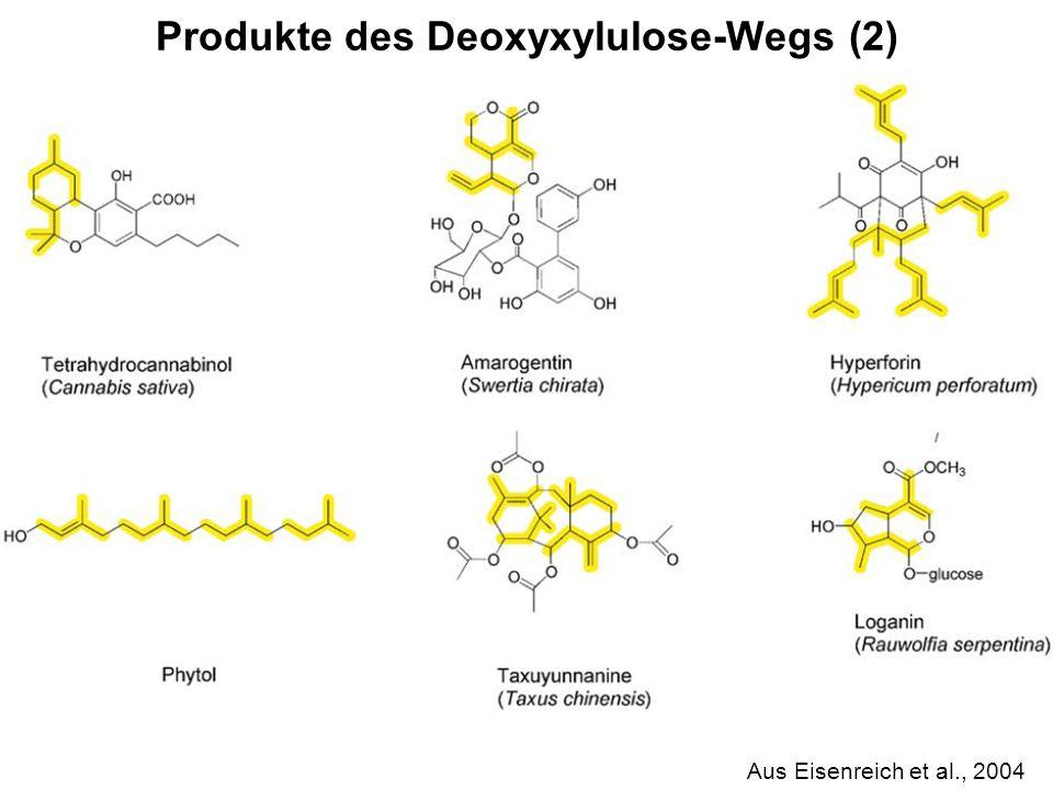 Produkte des Deoxyxylulose-Wegs (2)
