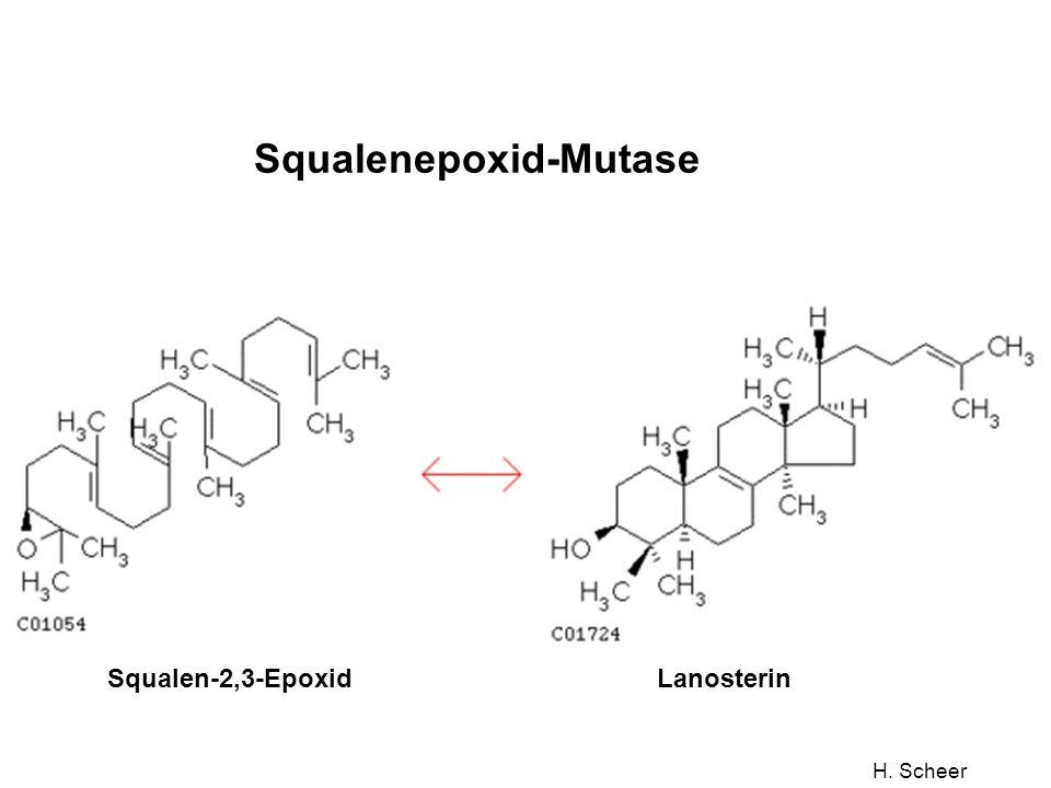Squalenepoxid-Mutase