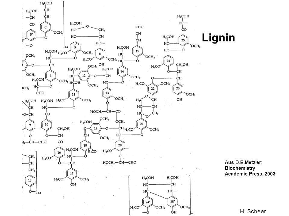 Lignin Aus D.E.Metzler: Biochemistry Academic Press, 2003