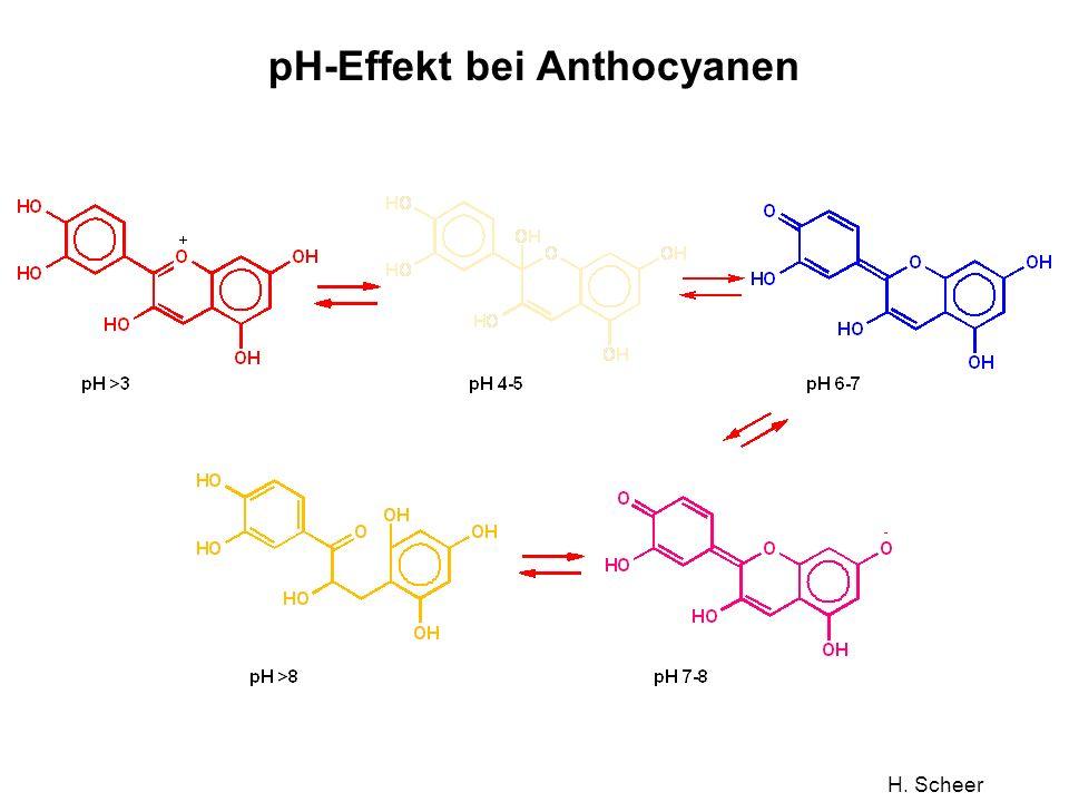 pH-Effekt bei Anthocyanen
