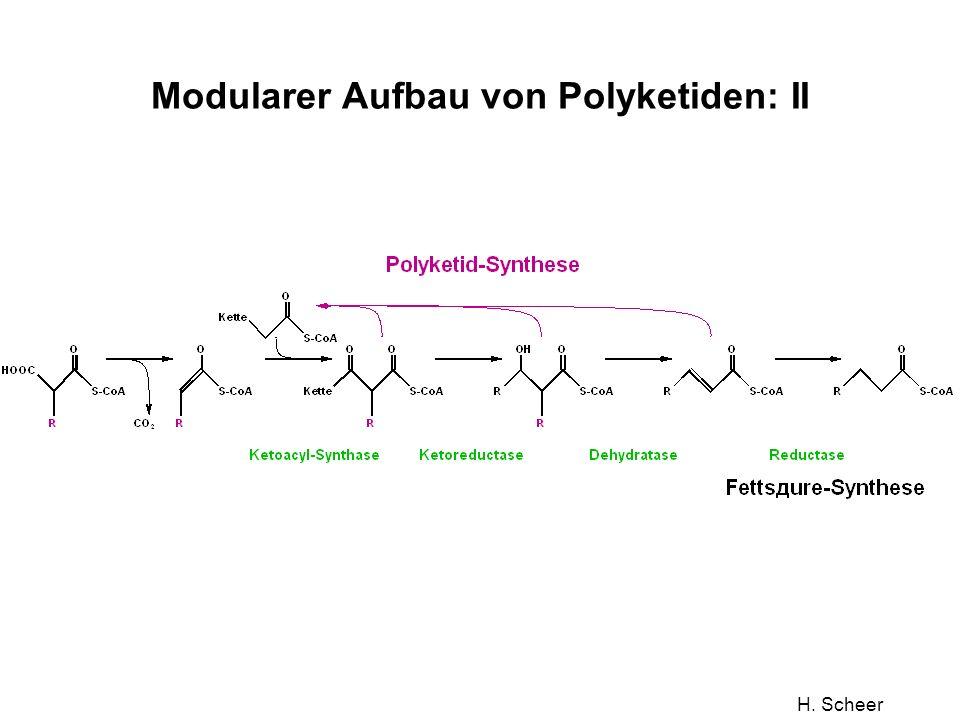 Modularer Aufbau von Polyketiden: II