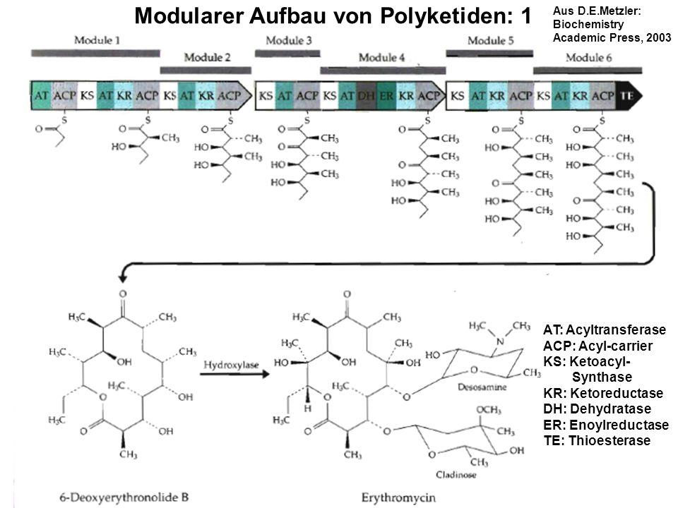 Modularer Aufbau von Polyketiden: 1