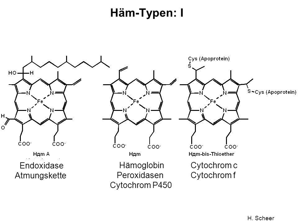 Häm-Typen: I Endoxidase Atmungskette Hämoglobin Peroxidasen