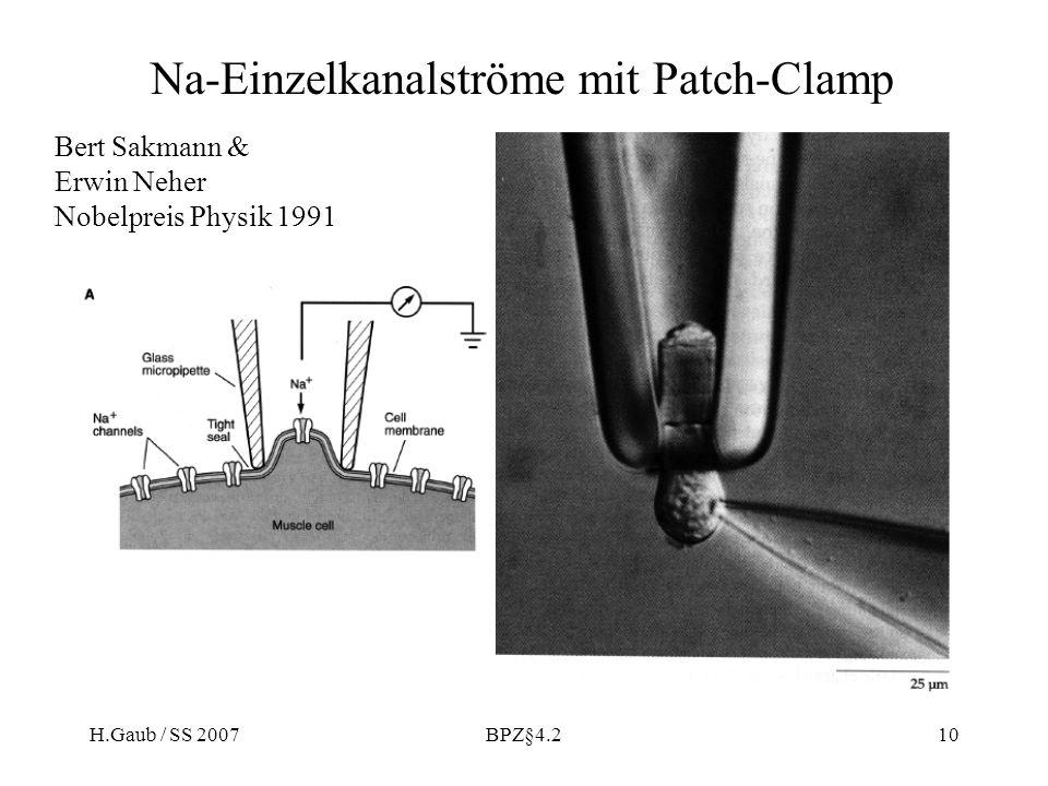 Na-Einzelkanalströme mit Patch-Clamp