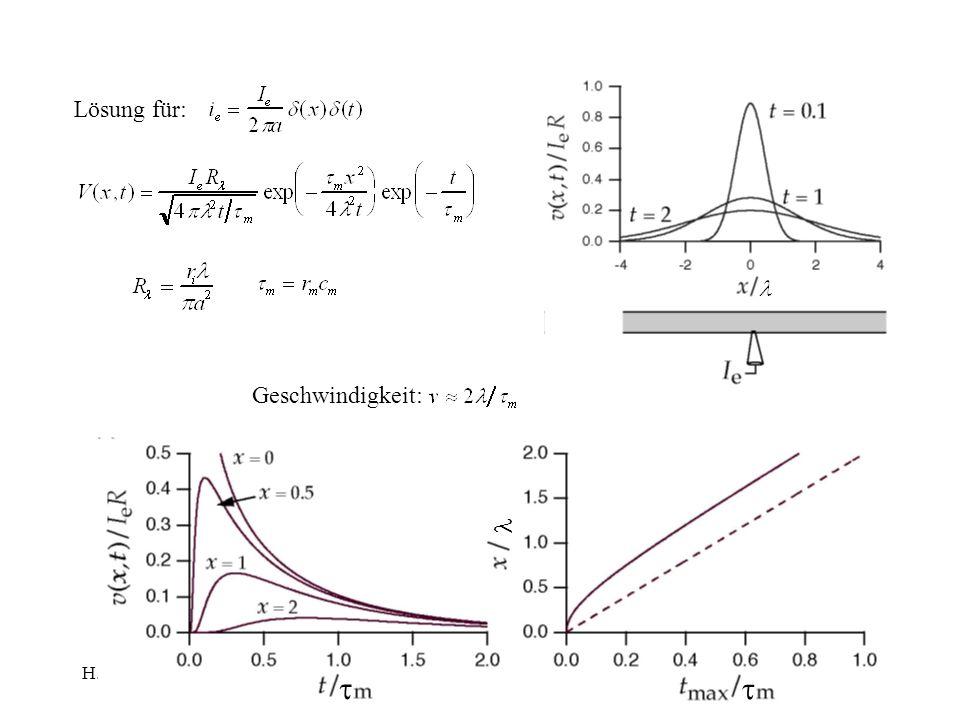 Lösung für: t l Geschwindigkeit: H.Gaub / SS 2007 BPZ§4.2