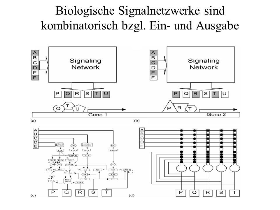 Biologische Signalnetzwerke sind kombinatorisch bzgl. Ein- und Ausgabe