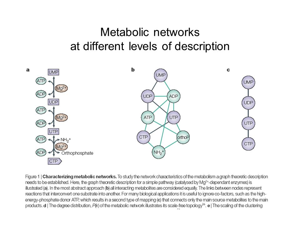 Metabolic networks at different levels of description