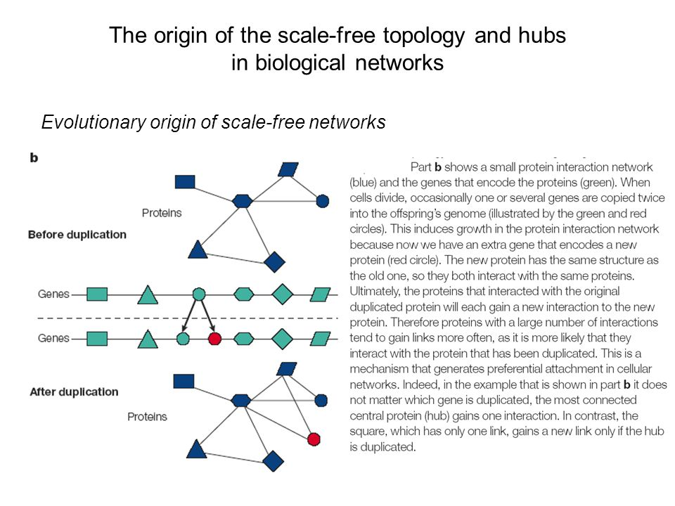 The origin of the scale-free topology and hubs in biological networks