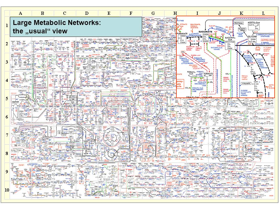 "Boehring-Mennheim Large Metabolic Networks: the ""usual view"