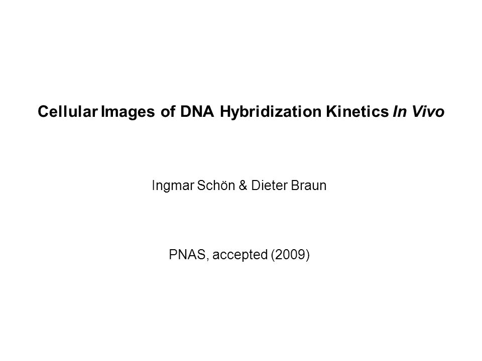Cellular Images of DNA Hybridization Kinetics In Vivo