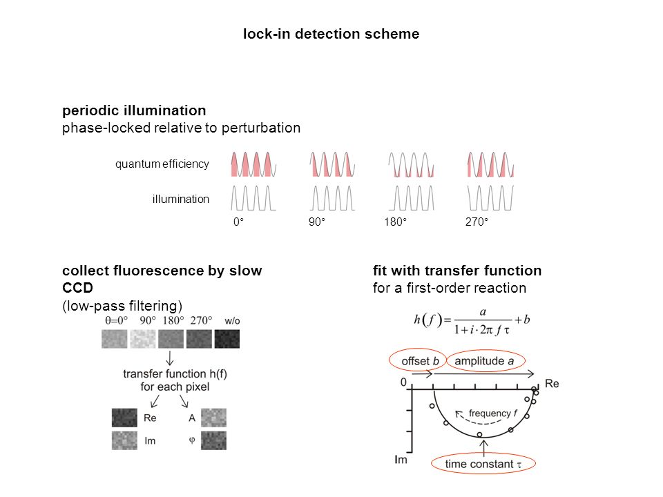 lock-in detection scheme