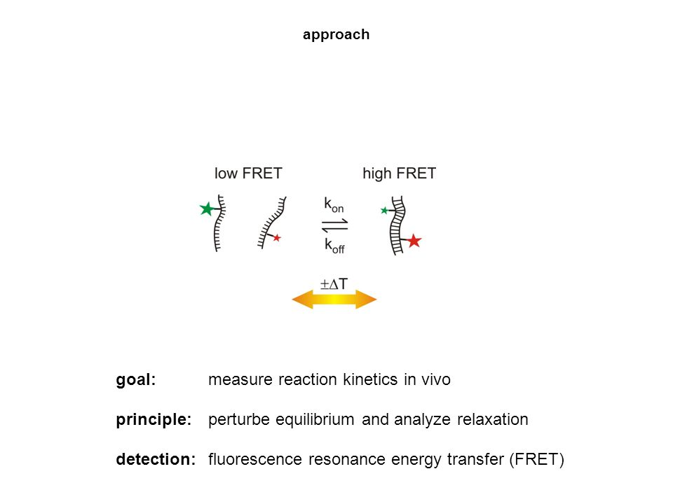 goal: measure reaction kinetics in vivo