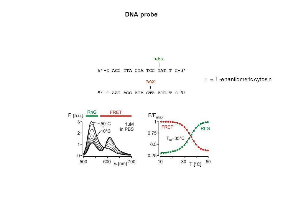DNA probe RhG | 5'-C AGG TTA CTA TCG TAT T C-3' ROX