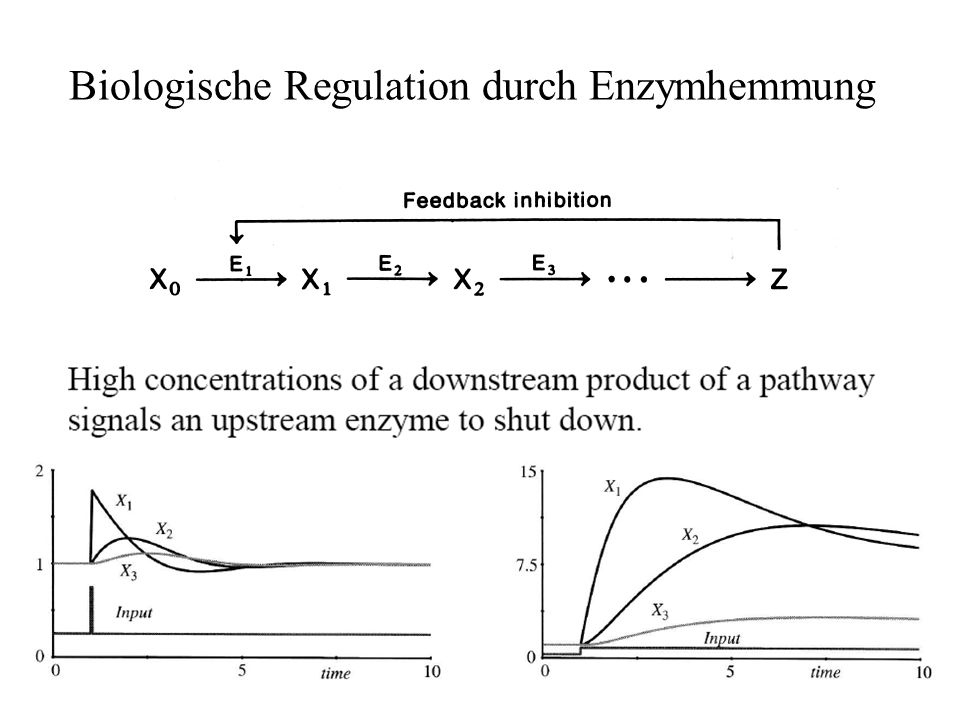 Biologische Regulation durch Enzymhemmung