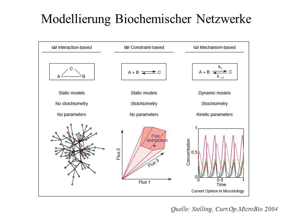 Modellierung Biochemischer Netzwerke
