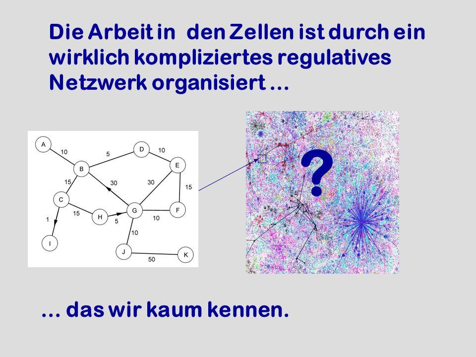 Die Arbeit in den Zellen ist durch ein wirklich kompliziertes regulatives Netzwerk organisiert ...