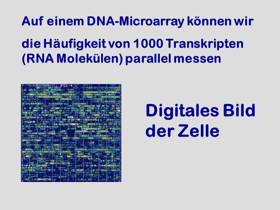 Digitales Bild der Zelle
