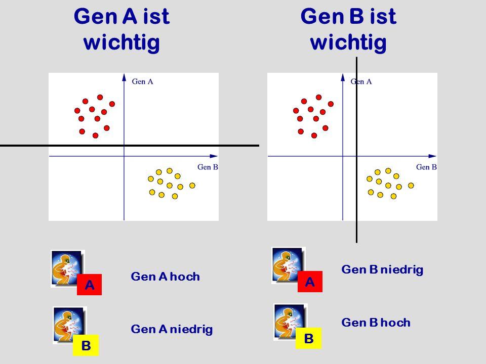 Gen A ist wichtig Gen B ist wichtig
