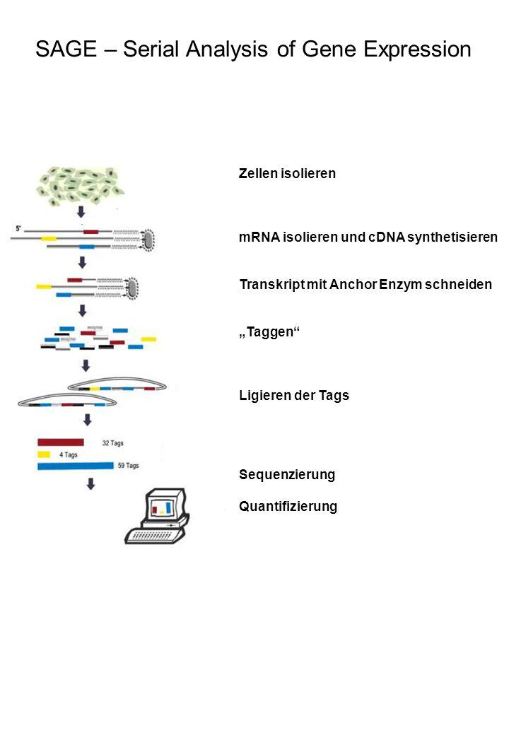 SAGE – Serial Analysis of Gene Expression