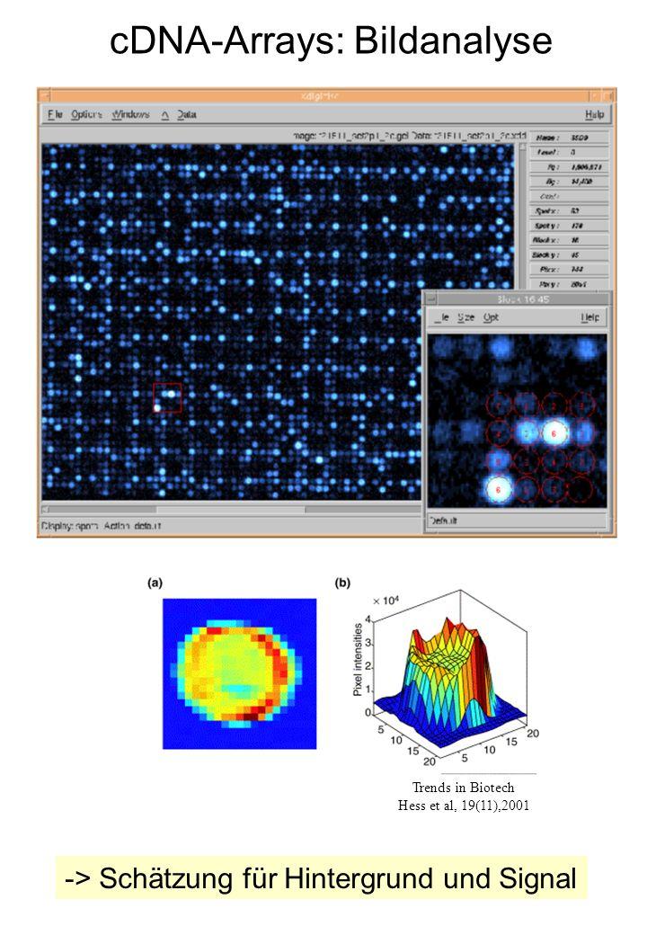 cDNA-Arrays: Bildanalyse