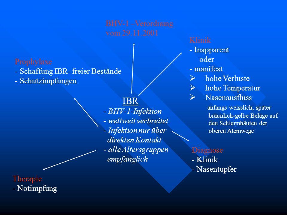 IBR BHV-1 –Verordnung vom 29.11.2001 Klinik Inapparent oder manifest