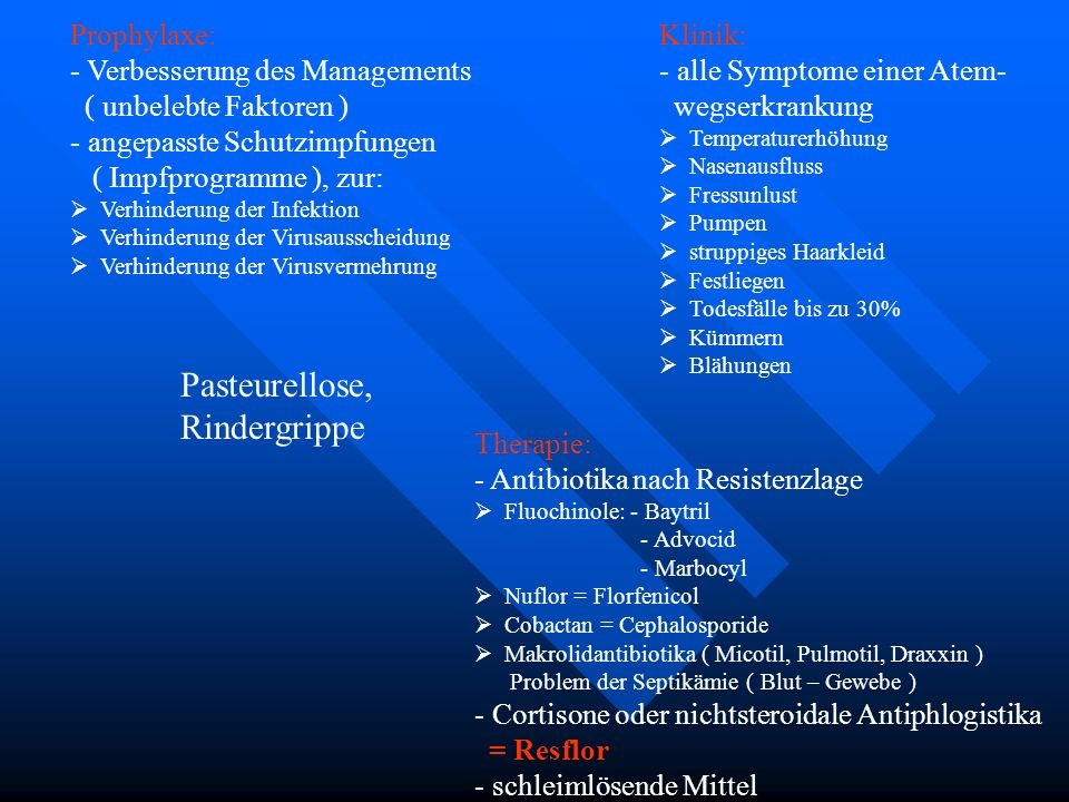 Pasteurellose, Rindergrippe Prophylaxe: Klinik: