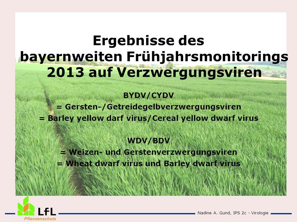 Ergebnisse des bayernweiten Frühjahrsmonitorings 2013 auf Verzwergungsviren