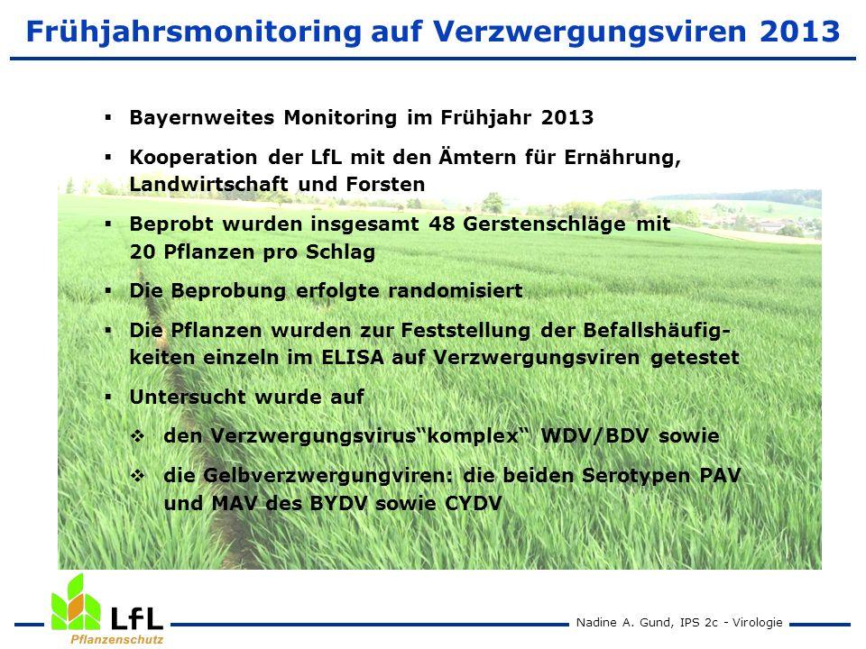 Frühjahrsmonitoring auf Verzwergungsviren 2013