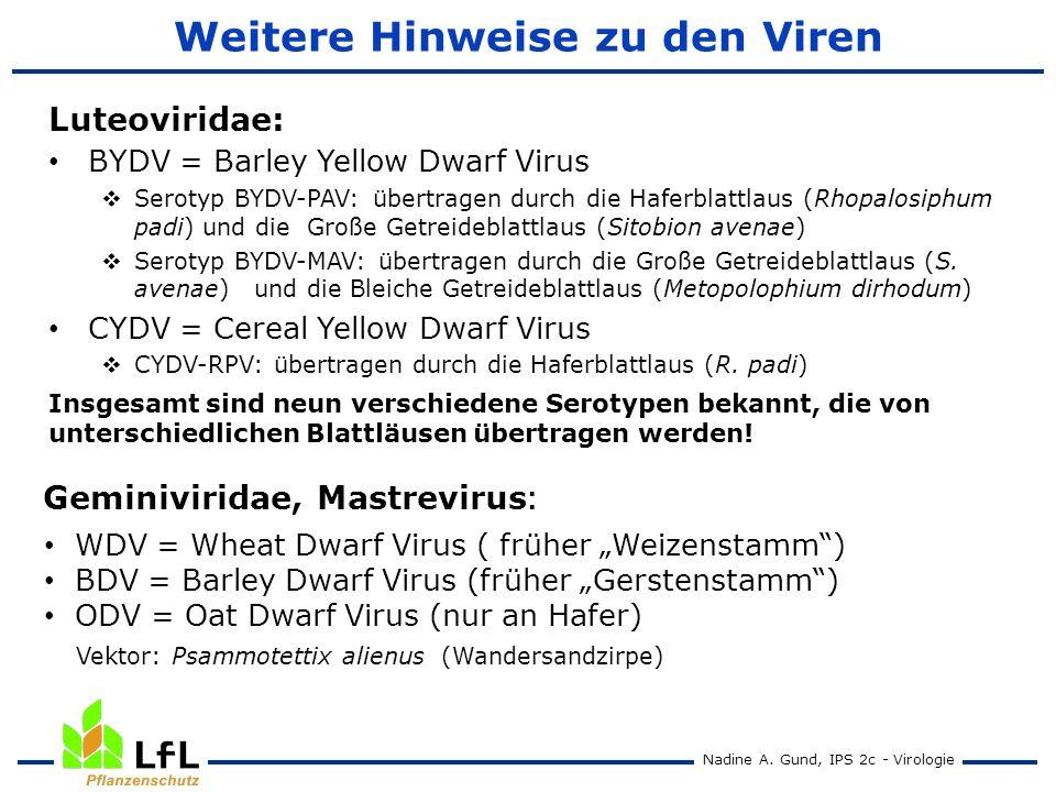 Weitere Hinweise zu den Viren
