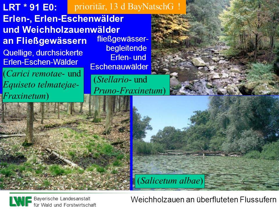Erlen-, Erlen-Eschenwälder und Weichholzauenwälder an Fließgewässern