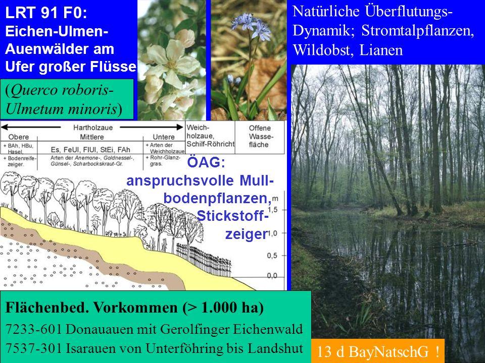 Natürliche Überflutungs- Dynamik; Stromtalpflanzen, Wildobst, Lianen