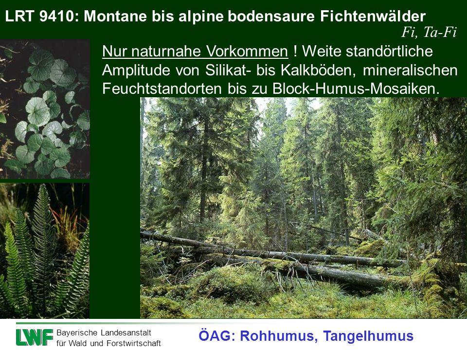 LRT 9410: Montane bis alpine bodensaure Fichtenwälder Fi, Ta-Fi