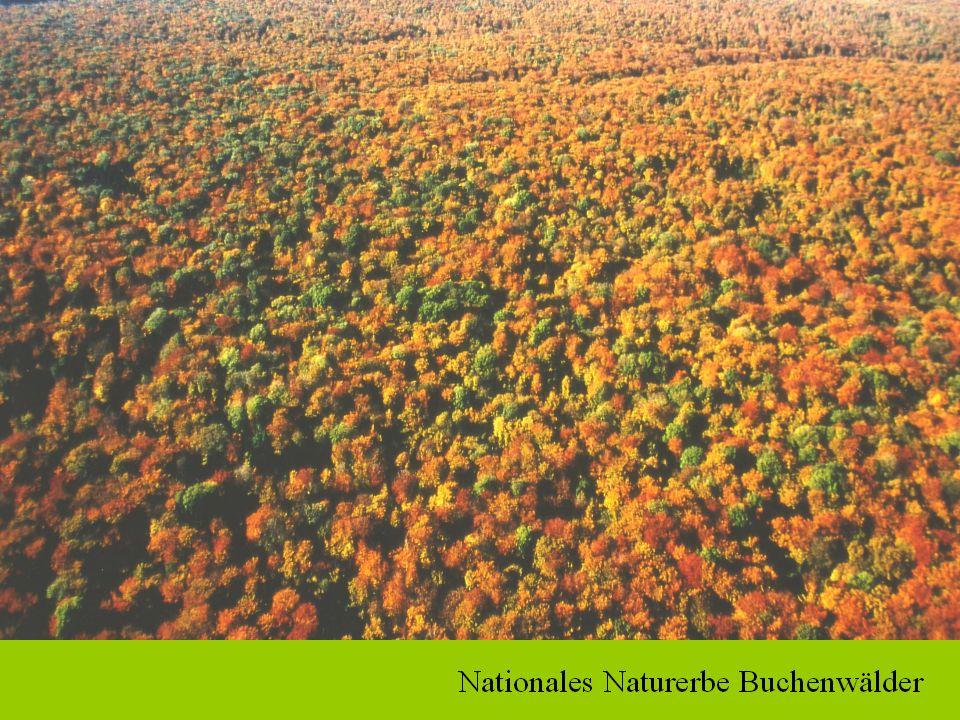 Wald-Lebensraumtypen gem. Anhang I der FFH-Richtlinie