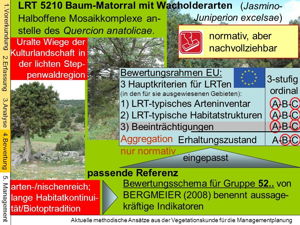 LRT 5210 Baum-Matorral mit Wacholderarten