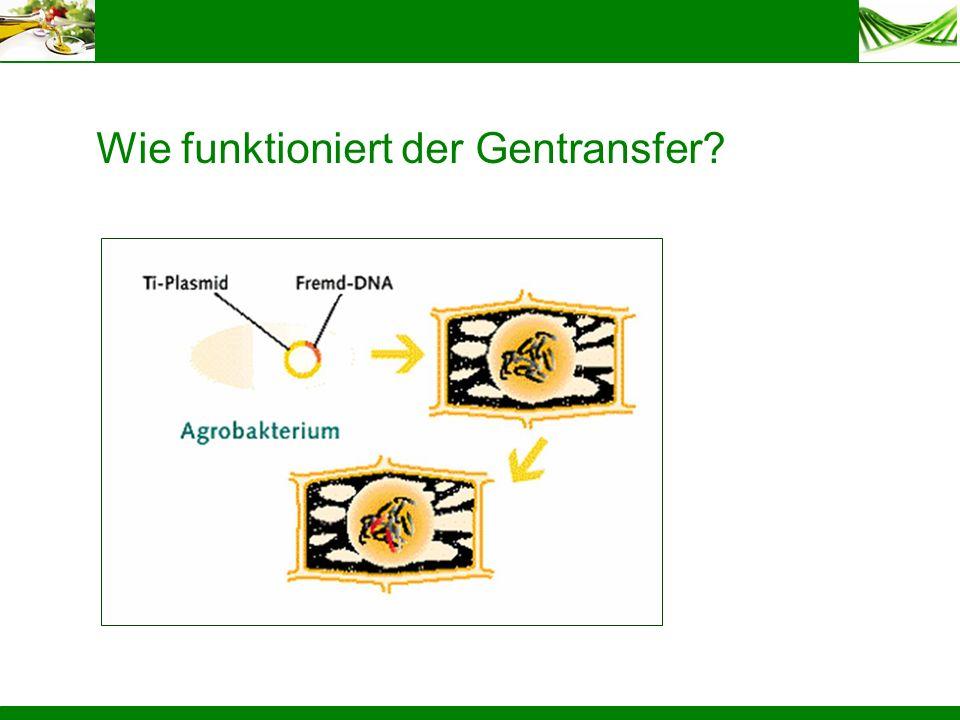 Wie funktioniert der Gentransfer
