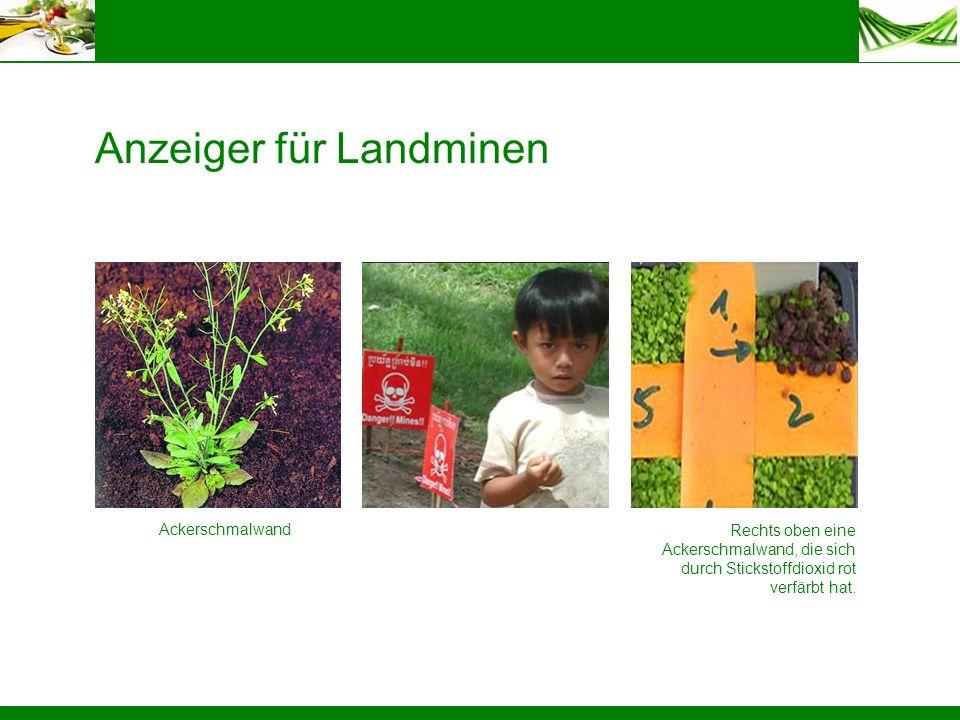 Anzeiger für Landminen