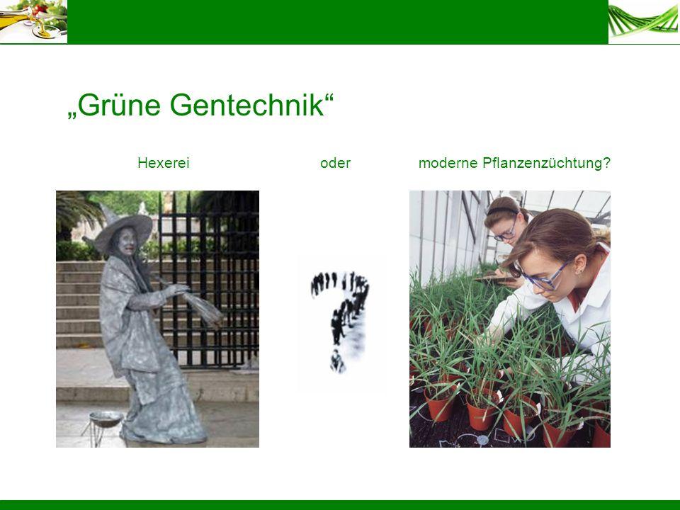 """Grüne Gentechnik Hexerei oder moderne Pflanzenzüchtung"