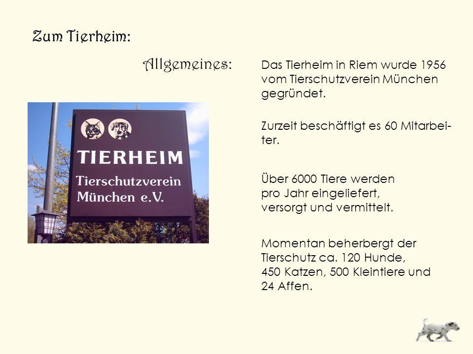 Zum Tierheim: Allgemeines: